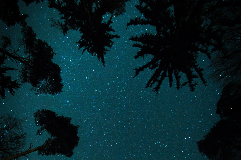The night sky's stars are framed by trees in this photo.