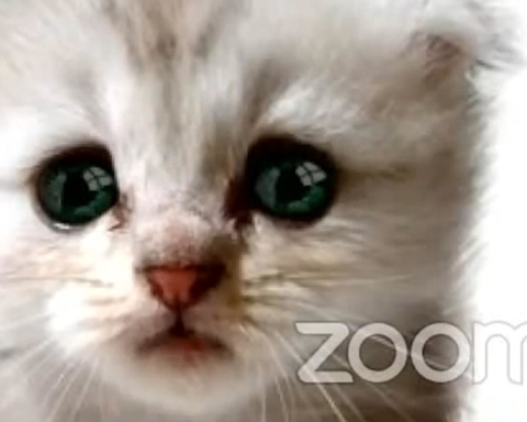 A photo of a kitten with ZOOM written over it.