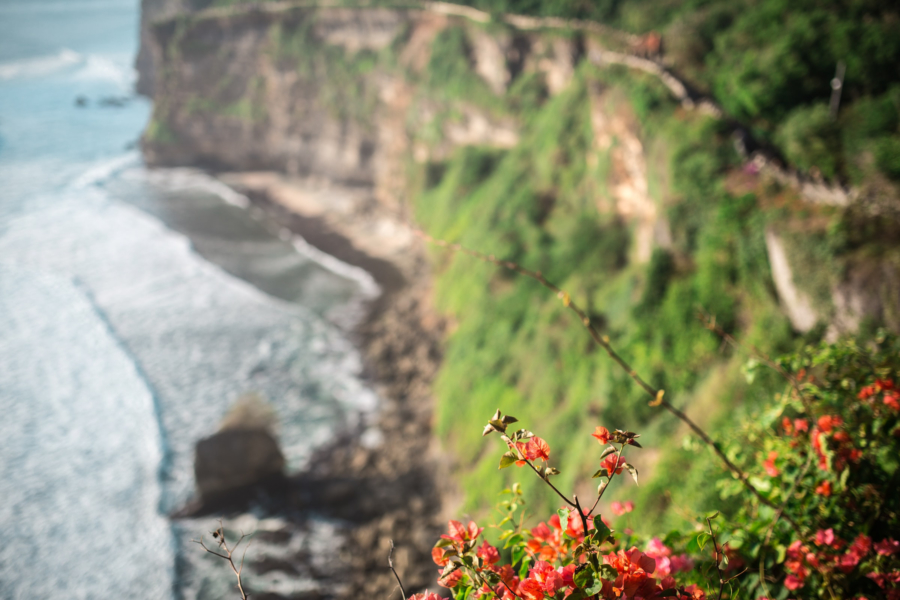 Flowers and rocky cliffs above the seashore